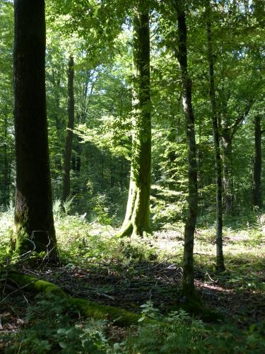 Forêt de La Croix aux Bois 09.2013 015.jpg