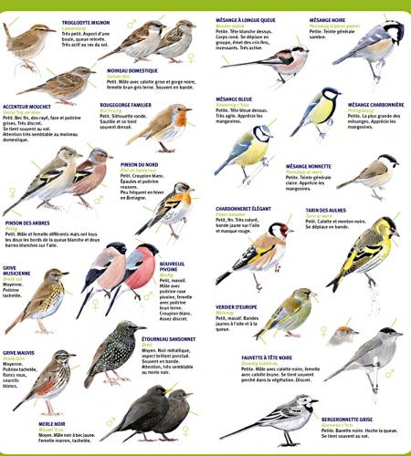 comptage-des-oiseaux-des-jardins-2.jpg