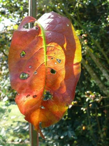 feuilles mortes,ecologie,compostage