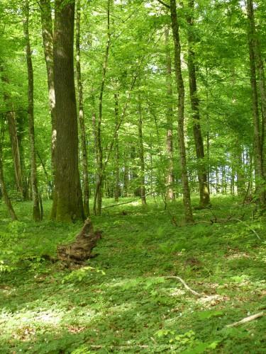randonnée,velo club vouzinois,la croix aux bois