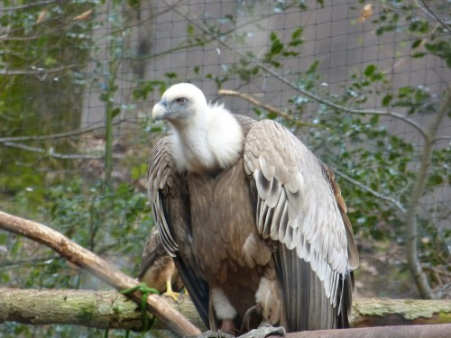 vautour,fne,lpo,ecologie