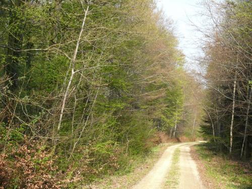 forêt,gestion des forêt, fne