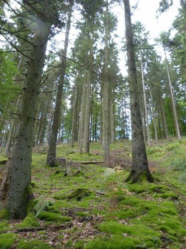 Forêt de La Croix aux Bois 09.2013 033.jpg