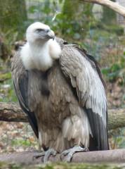 dette,argentine,fonds vautour