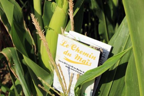 Les chemins du maïs.jpeg