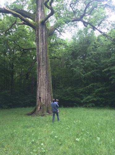 le gros chêne.jpg