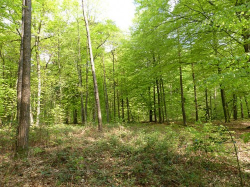onf,communes forestieres,gestion forêts